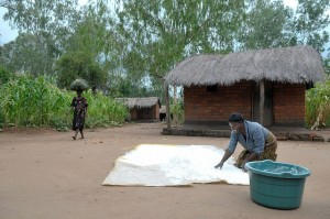 Woman drying maize in Malawi (Source: CIMMYT 2012)