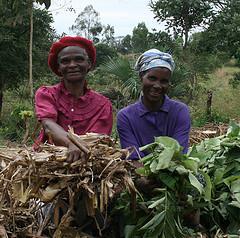 Malawian women composting