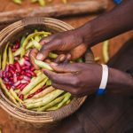 Harnessing markets for improved nutrition