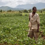 MaSSP Report: The state of agricultural extension and advisory services provision in Malawi